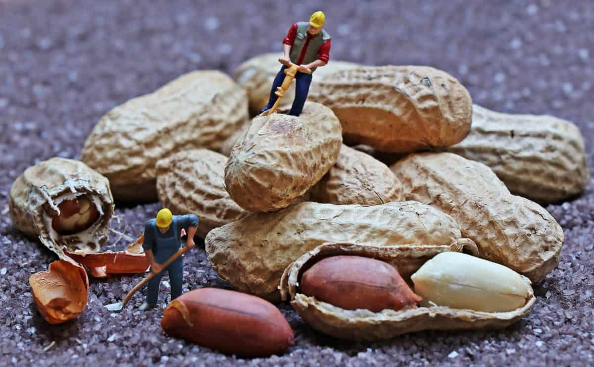 food, object, plastic, shell, nature, peanut, figure, toy, decoration