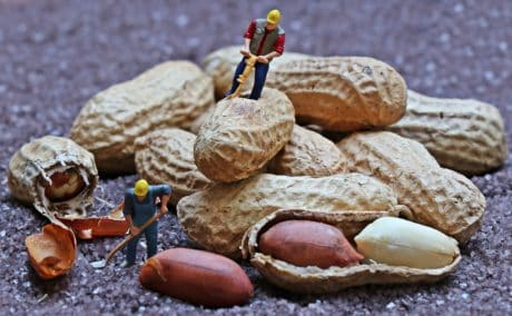 food, object, plastic, shell, nature, peanut, figure, toy, decoration