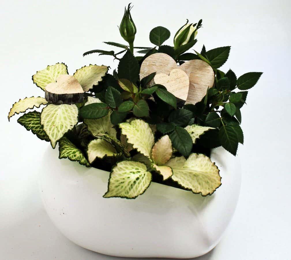 still life, leaf, pot, vase, indoor, flower, herb