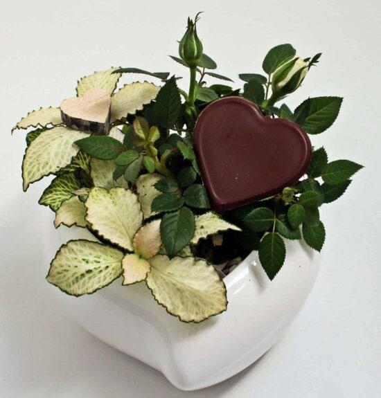 still life, decoration, heart, green leaf, food, arrangement, indoor