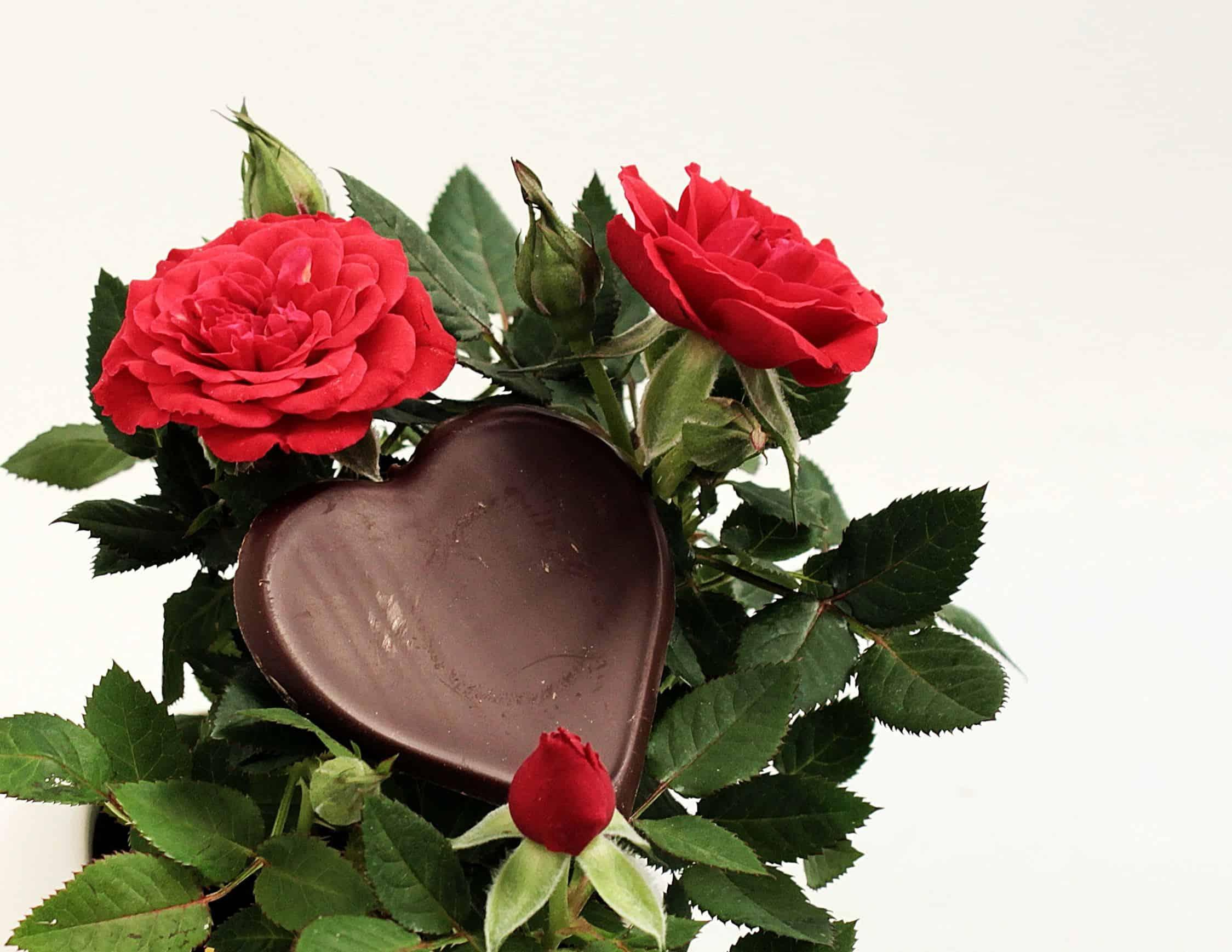 Image Libre Fleur Petale Rose Coeur Amour Cadeau Nature