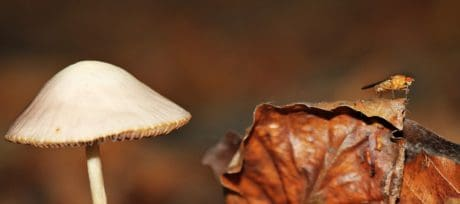 leaf, mushroom, fungus, natural, autumn