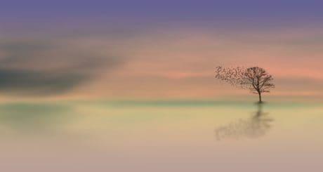 photomontage, ciel, nature, paysage, aube, soleil, crépuscule, arbre, horizon