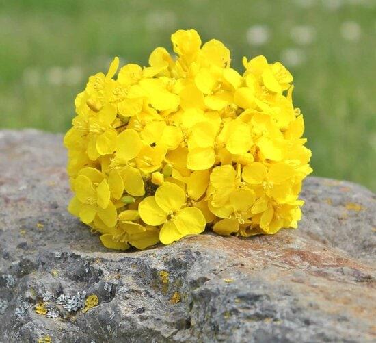 Hortensie, Blume, Natur, Pflanze, Kraut, Blatt, Stein, Moos, Boden