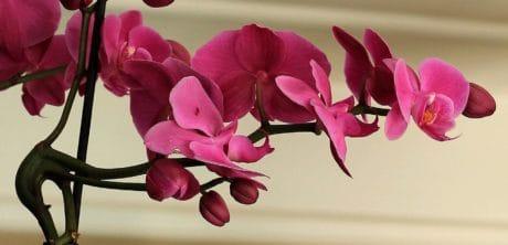 Natur, Blume, schön, Blütenblätter, Garten, Blatt, Pflanze