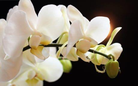 natura, ramo, fiore, petalo, bello, giardino, esotico