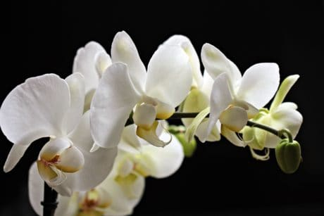 white orchid, petal, exotic, nature, white flower, beautiful, plant, blossom
