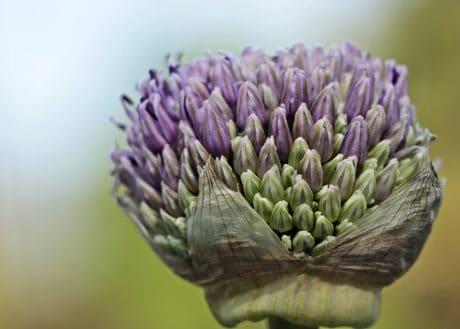 Natura, kwiat, słupek, roślina, Płatek