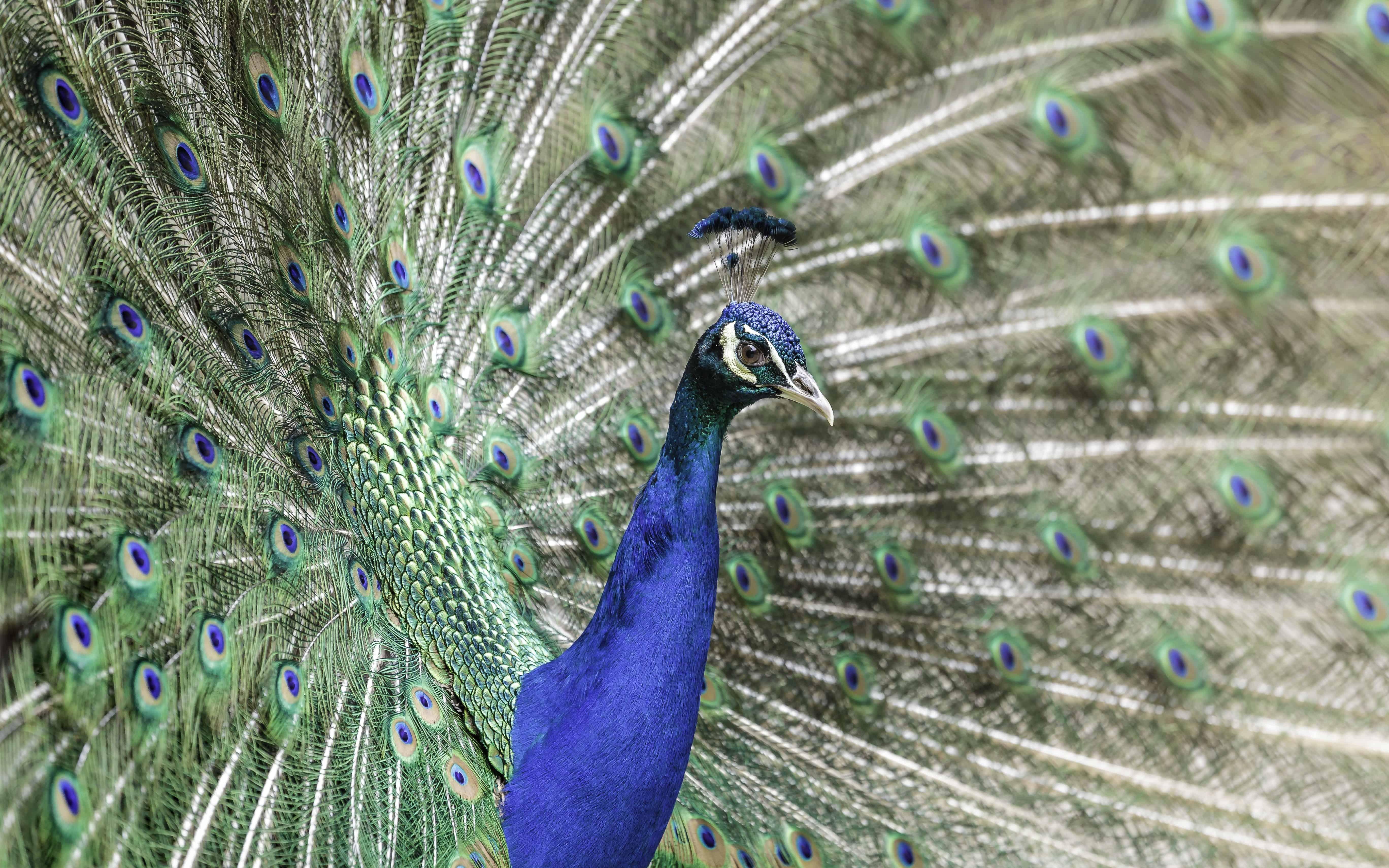7800 Koleksi Gambar Hewan Warna Biru HD Terbaik