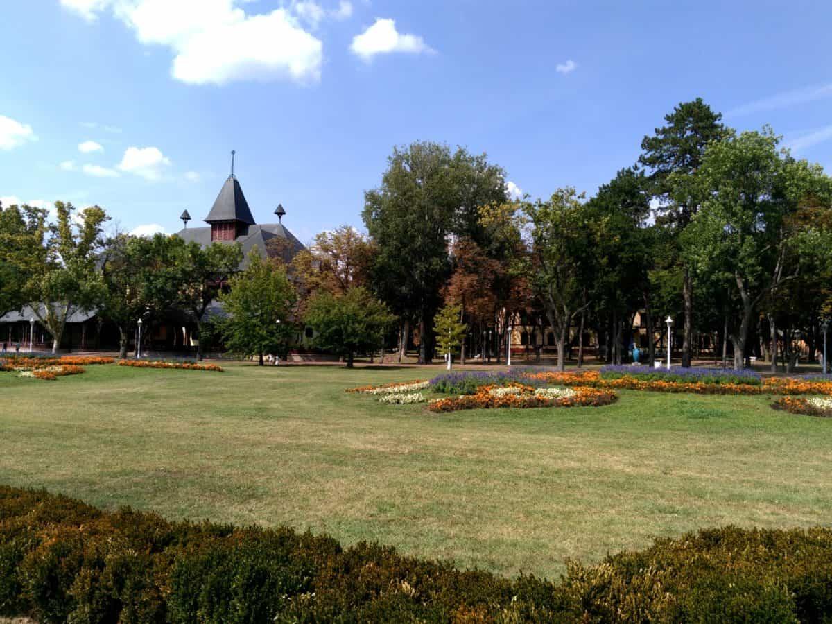 flower garden, grass, tree, landscape, blue sky, outdoor