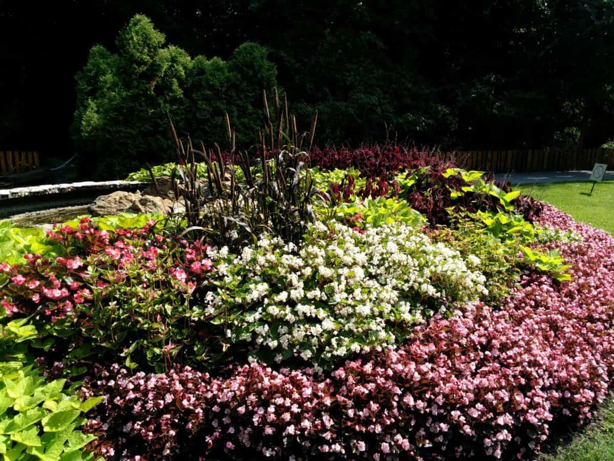 nature, flower, garden, flora, plant, tree, outdoor, grass