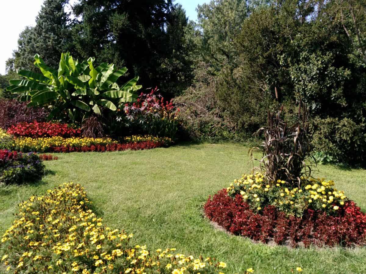 leaf, landscape, flower, nature, flora, grass, garden, lawn, tree