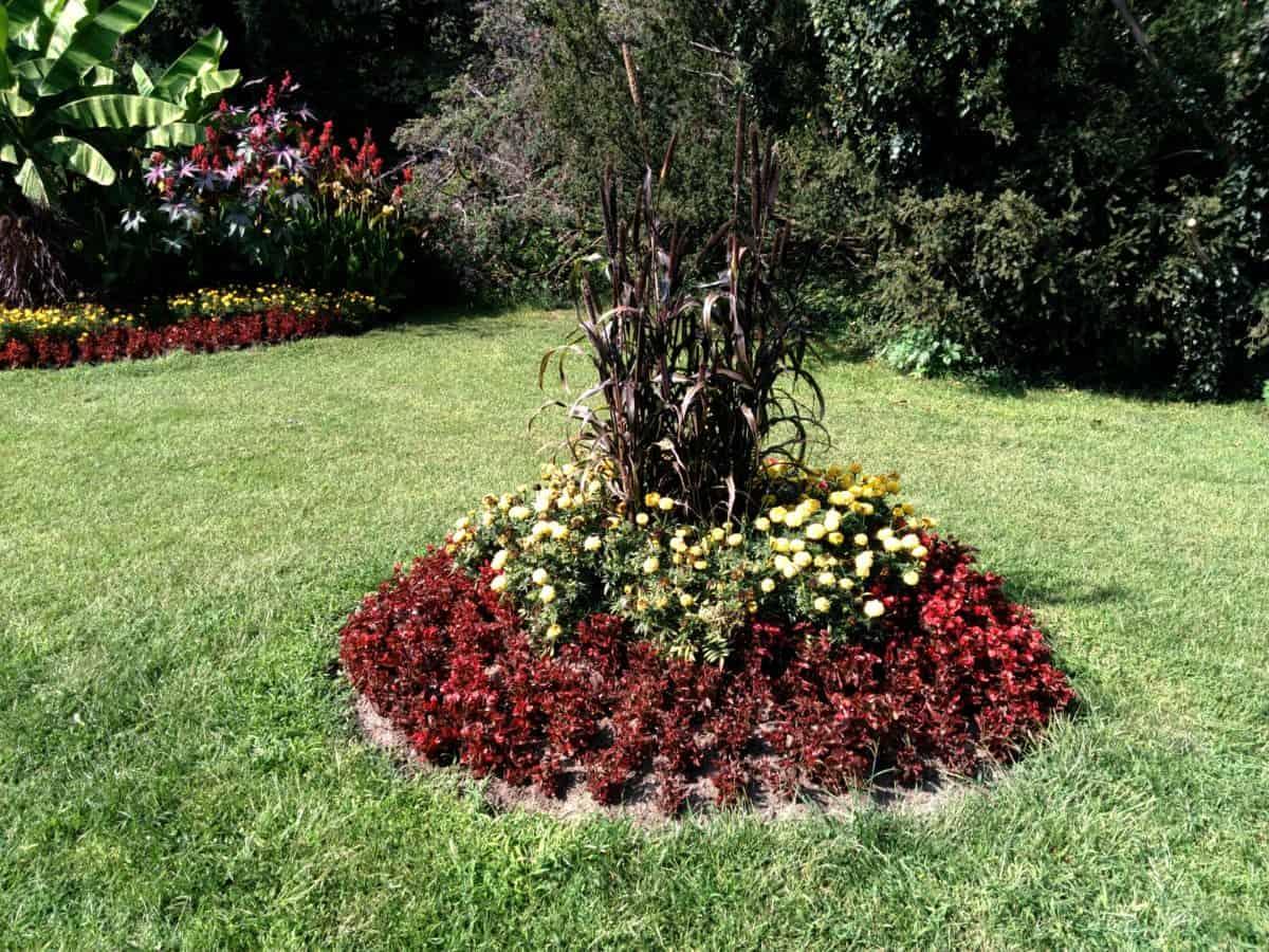 flower, leaf, grass, flora, lawn, garden, summer, nature, tree