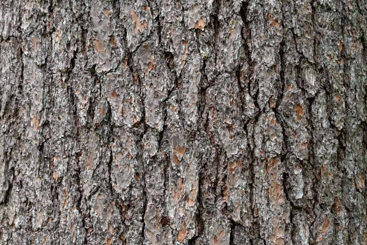 pine, wood, dry, tree, texture, oak, nature, bark, pattern
