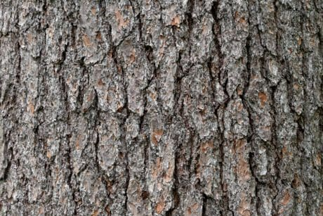 pine, wood, dry, tree, texture, oak, nature, bark, pattern