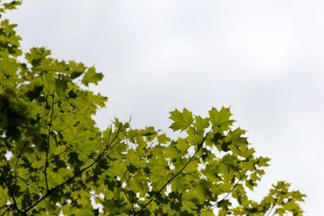 nature, summer, branch, leaf, wood, sky, tree, environment