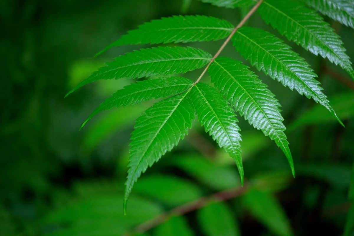 Fern, list, flora, léto, příroda, strom, rostlin, lesní, zeleň