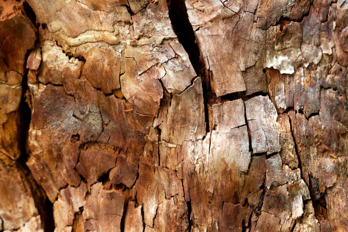 pattern, old, texture, nature, brown bark, tree, firewood, wood