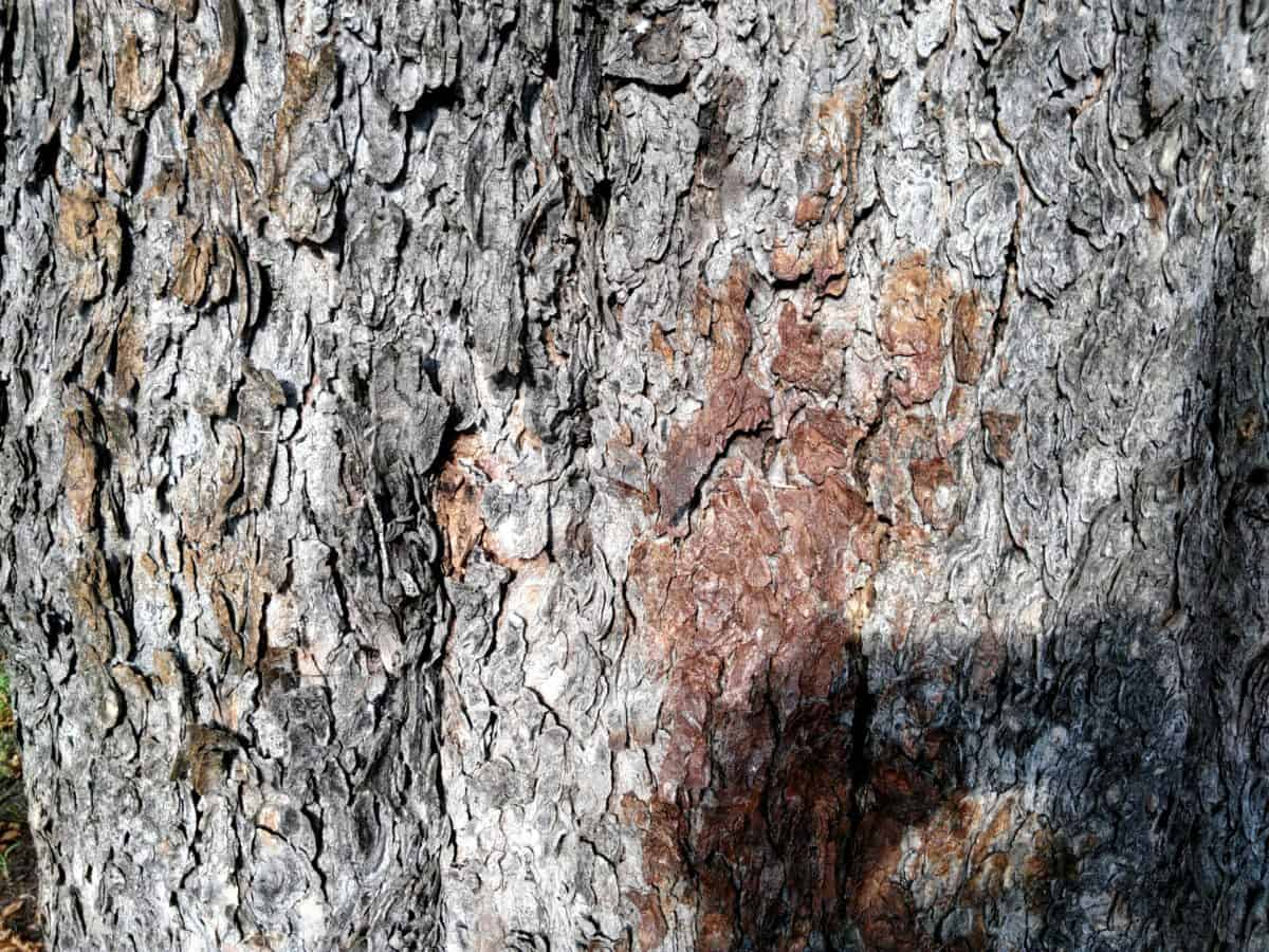 tree bark, old, texture, wood, tree, brown bark, material