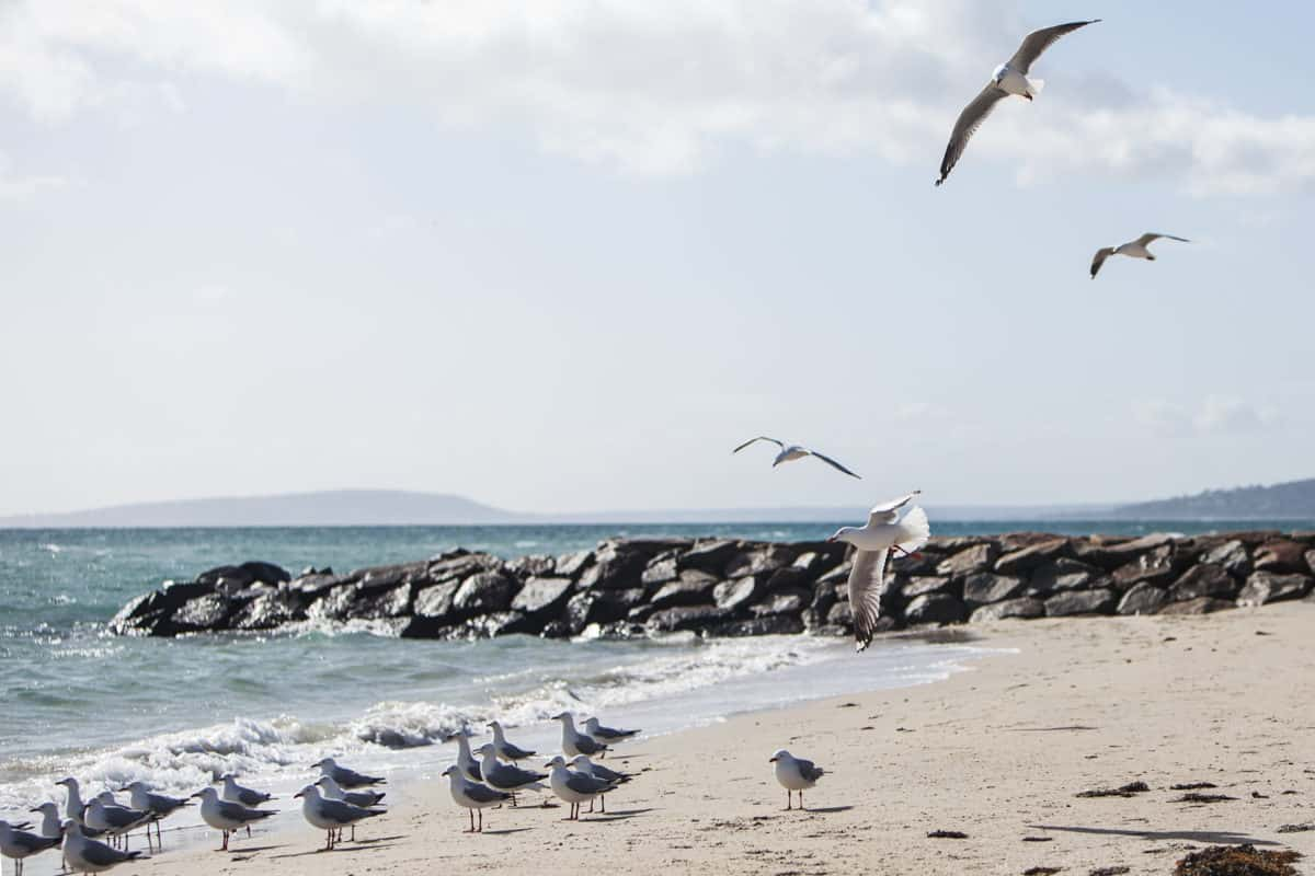 Lokki, vesi, ranta, luonto, taivas, meren ranta, meri, meri, lintu, ranta viivaa