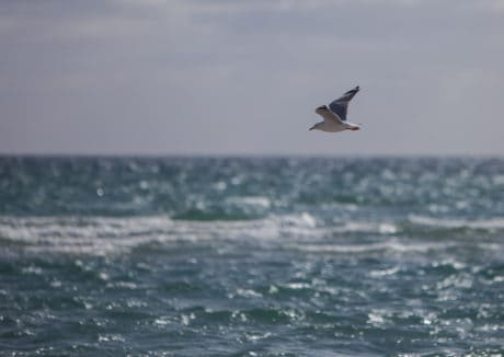 seagull, seabird, wave, sky, bird, seashore, beach, water, ocean, nature, flight