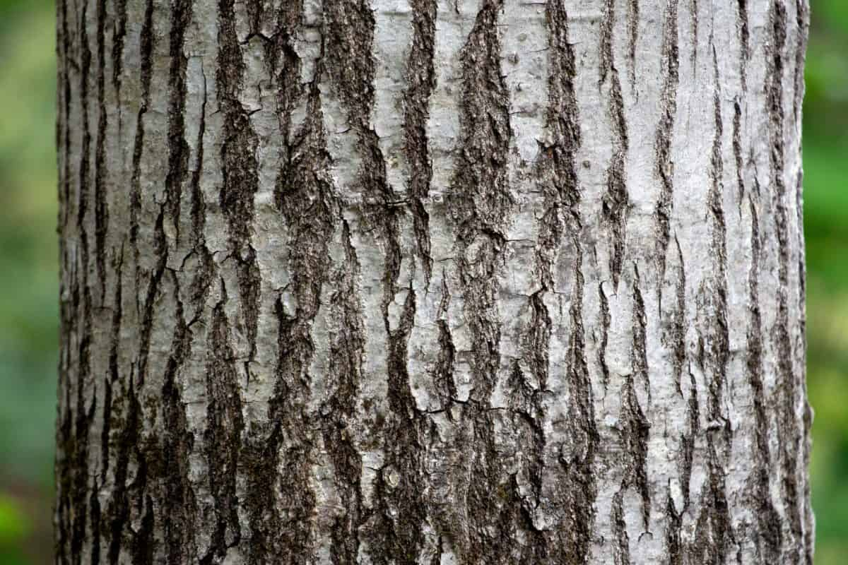 albero, legno, natura, corteccia di albero, ambiente, quercia, betulla, foresta