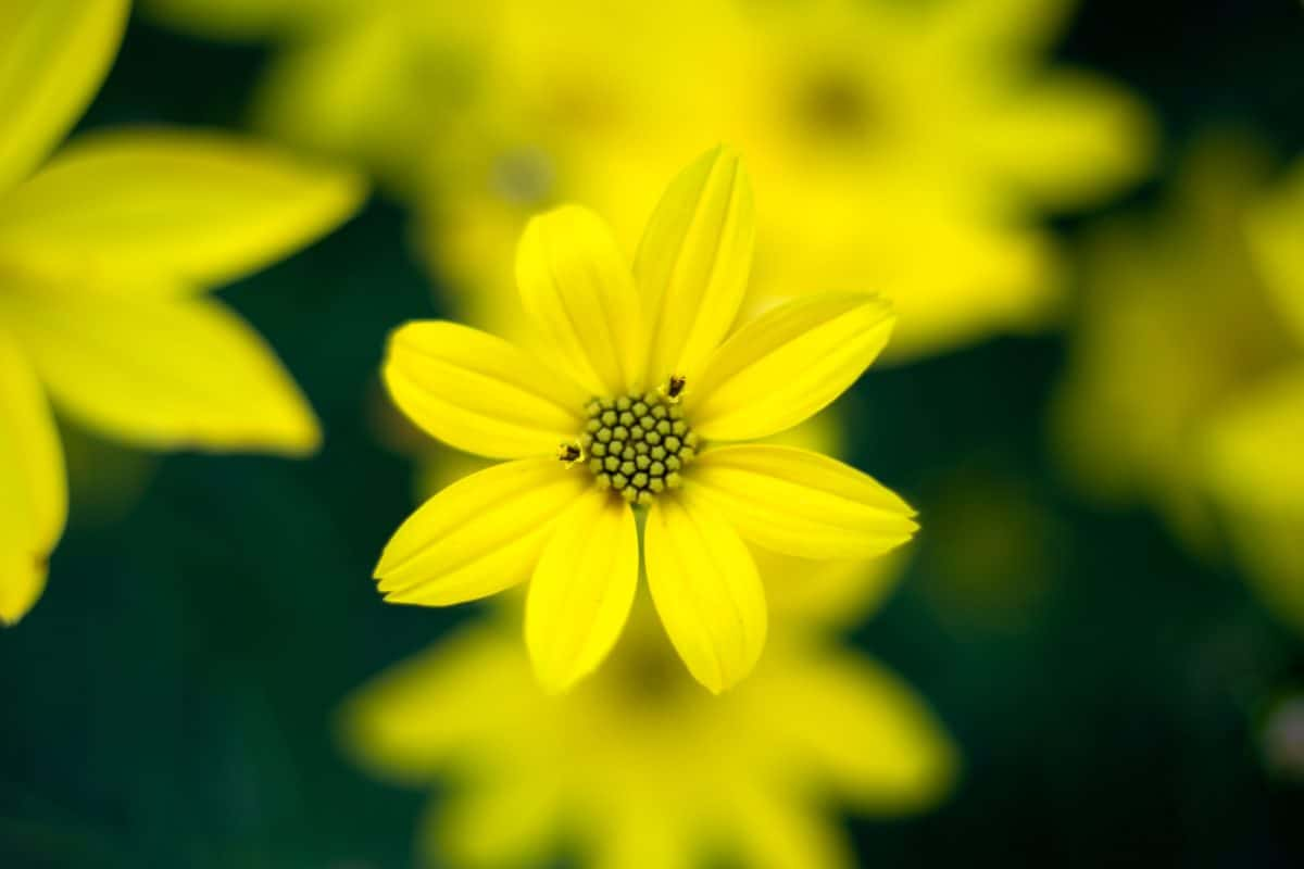 leaf, nature, yellow flower, summer, sunflower, plant, blossom, petal