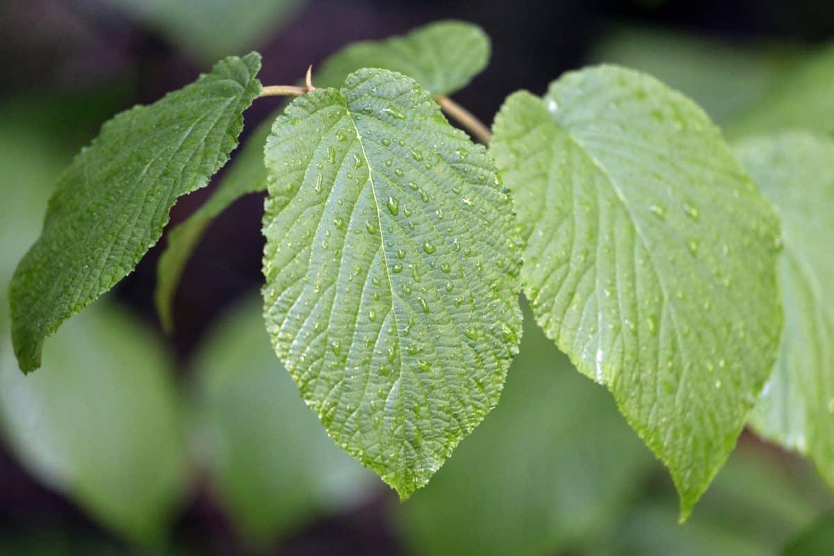zeleni list, priroda, stablo, biljka, biljka, lišće, grana