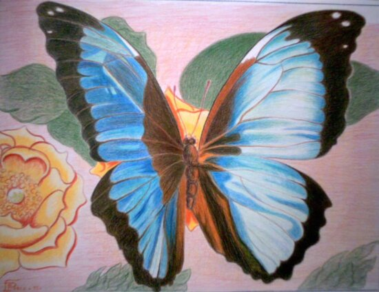 oil painting, insect, art, biology, butterfly, nature, flower