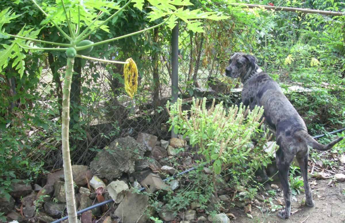 garden, leaf, nature, wood, tree, dog, outdoor, grass