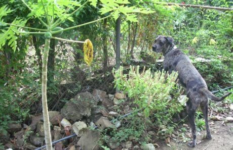 garden, leaf, nature, wood, tree, dog, outdoor, grass