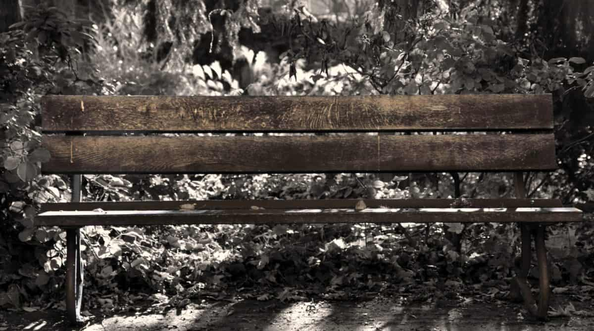 bench, furniture, outdoor, tree, ground, forest, shadow