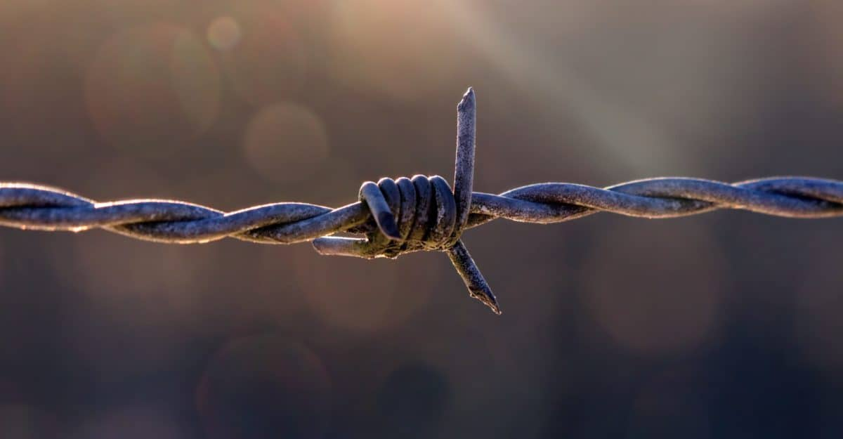 barbed wire, metal, steel, wire, barbed, rust, fence