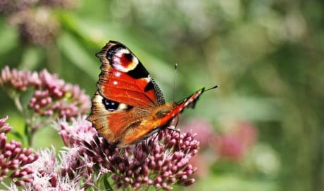 flower, garden, butterfly, insect, summer, nature