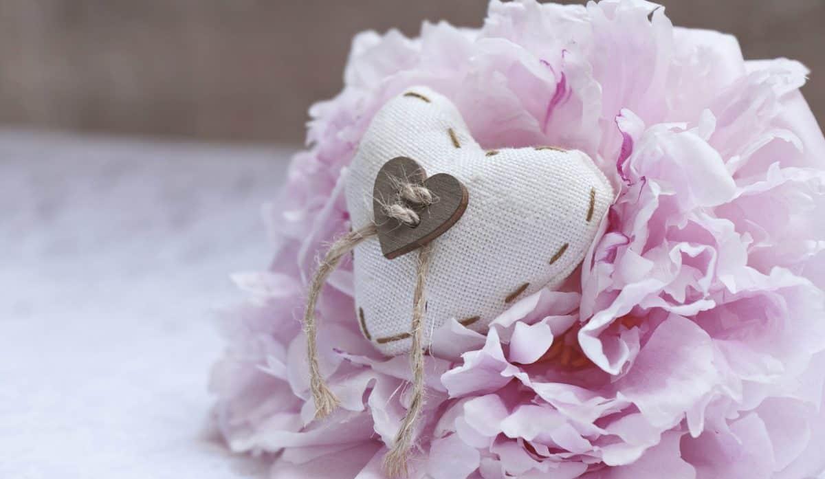 petal, rose, love, decoration, object, heart, decoration, flower, pink