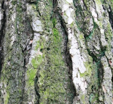 nature, environment, bark, wood, summer, leaf, moss, tree