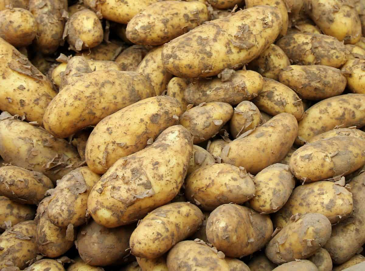 vegetable, food, diet, root, nutrition, potato, organic, brown