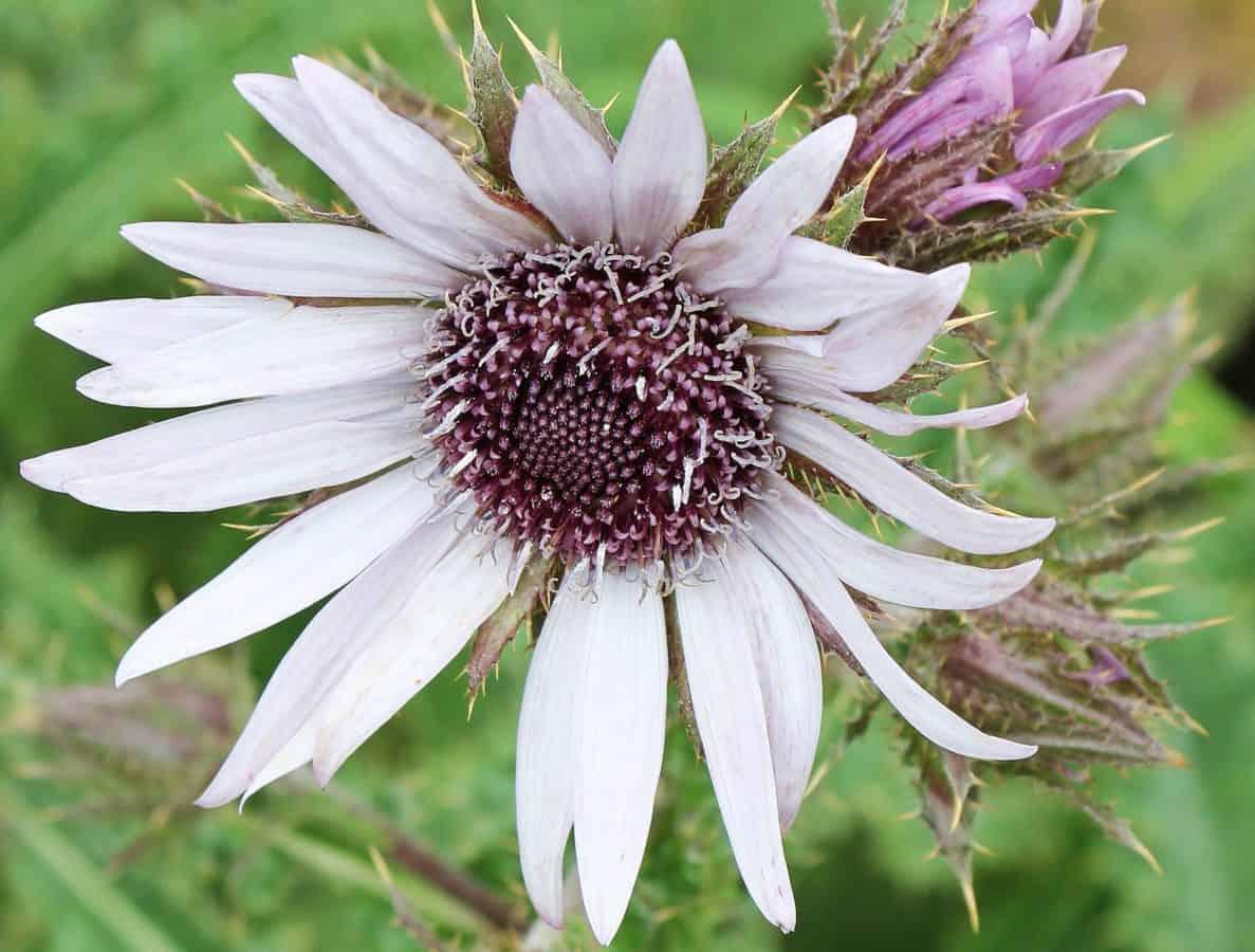 flower, garden, leaf, summer, nature, plant, herb, blossom