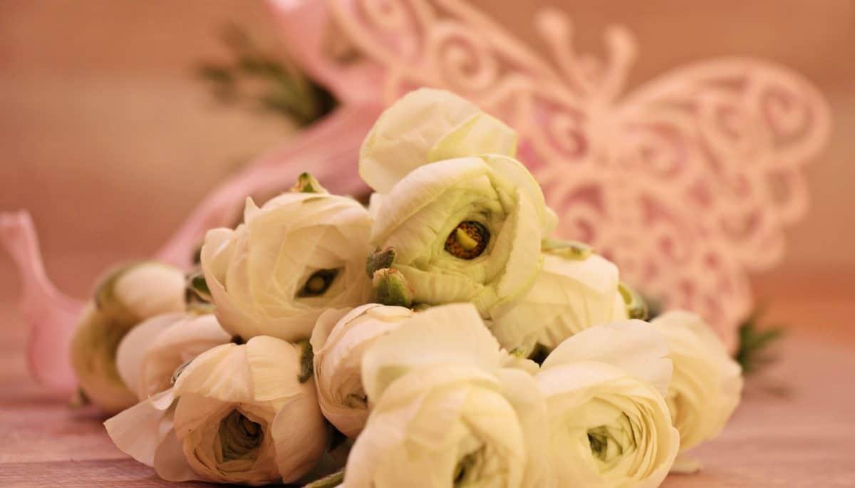 růže, zátiší, bílá, kytice, rostliny, květiny, okvětní lístek