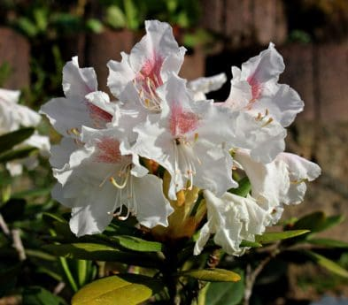 garden, leaf, flower, nature, petal, plant