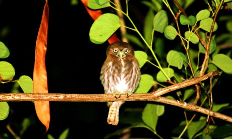 hawk, brown bird, night, forest, dark, animal, branch, ornithology