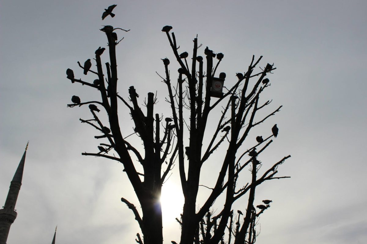 naturaleza, silueta, paisaje, pájaro, árbol, planta, rama, cielo, al aire libre