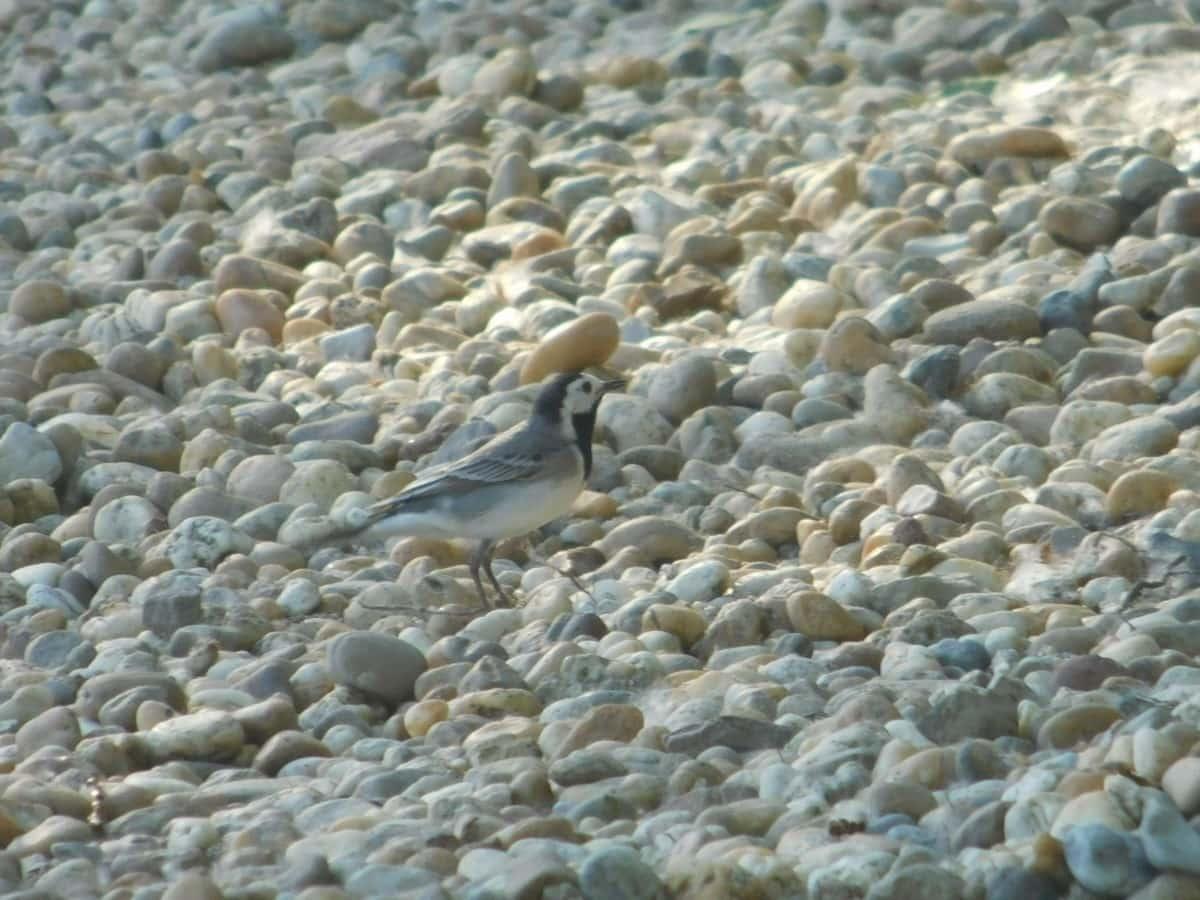 bird, animal, outdoor, daylight, avian, vertebrate, nature, stone, outdoor