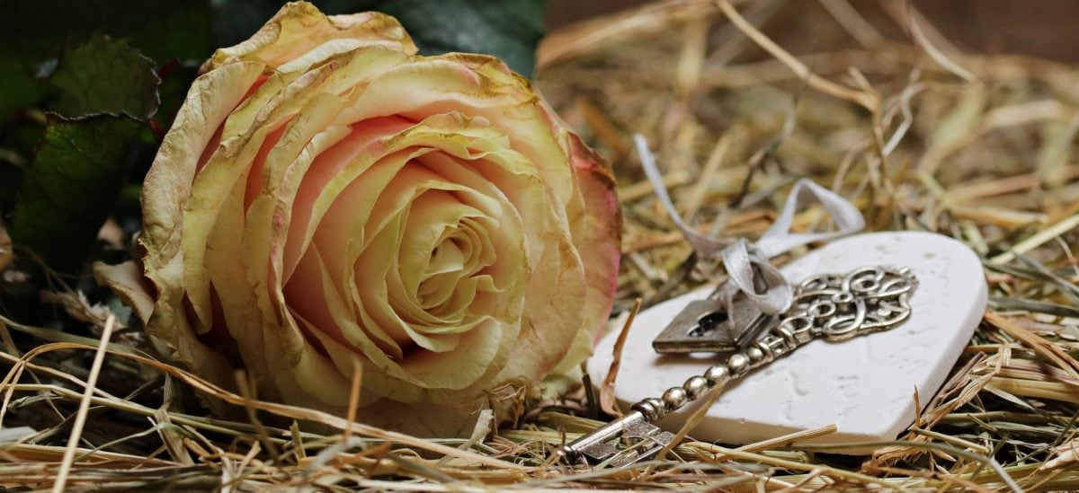heart, hay, metal, key, rose, leaf, plant, petal