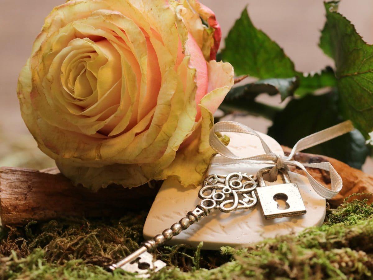 flower, metal, key, rose, leaf, plant, petal