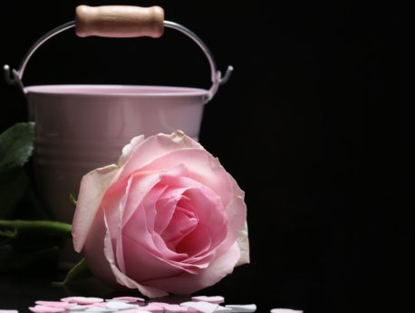 still life, photo studio, rose, flower, petal, pink, plant, bucket