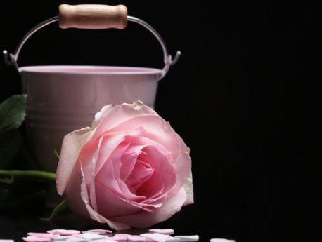 Zátiší, fotografické studio, růže, květiny, okvětní lístek, růžová, rostlina, kbelík