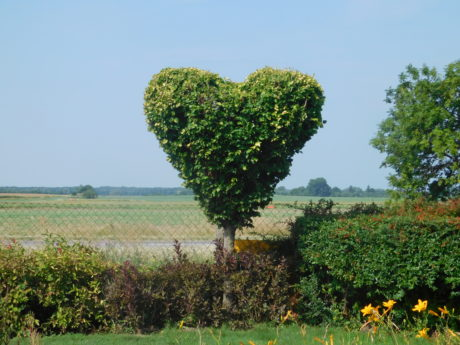 tree, heart, garden, field, nature, landscape, agriculture, herb