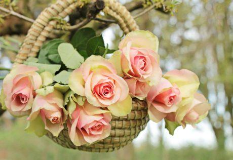 krásné, listí, růže, příroda, květiny, aranžmá, růžová