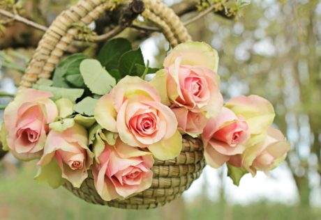 beau, feuille, rose, nature, fleur, arrangement, rose
